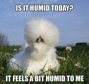 Humid Hair II meme
