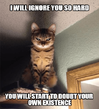 Pictures-of-Evil-Cat-Memes
